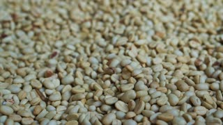 Video of green raw coffee bean pile texture background before roast