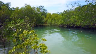 Video of Mangrove trees next to the ocean during low tide and high tide