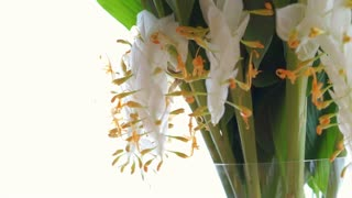 Video White flower hanging decoration in glass vase