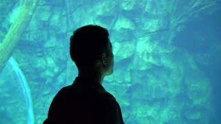 Asian man silhouette in turqouise aquarium dream concept