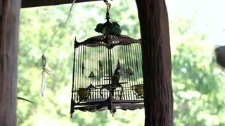 Asian Red-whiskered bulbul Bird In Beautiful Thai Cage Hd