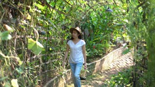 Asian woman with hat working in own farm business in green plants tunnel video