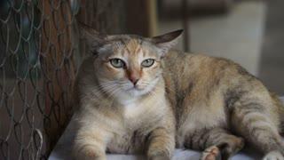 brown cat staring, looking at something slow motion