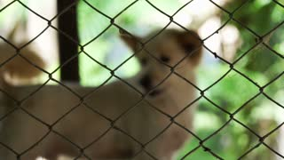 Dogs in shelter behind cage net. Looking and waiting for people to come adopt