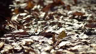 Dried autumn leaves pile blown by wind. People walk by in morning street side walk. Urban scene