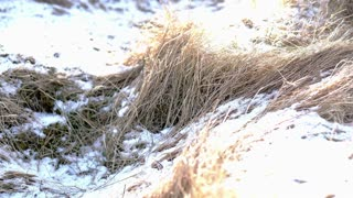 Dried meadow brown grass and snow pile in summer with sun light slow motion 120 fps