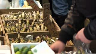 Fresh wasabi selling in Tsukiji fish market. Main ingredient for Japanese sushi nigiri food