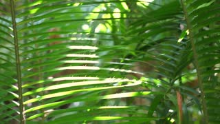 Green lush foliage of tropical forest video shot