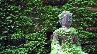 Moss cover buddha statue, calm peaceful religious concept