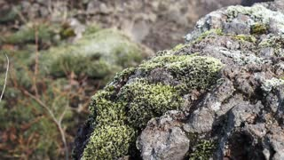 Moss volcano Iceland landscape slow motion video