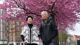 Old Asian senior couple happy and enjoy their trip to see cherry blossom