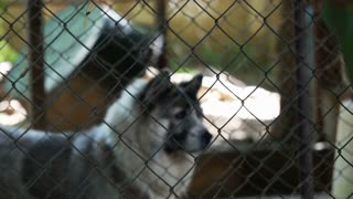 Poor abandon dogs in shelter, wagging tail and waiting for new owner to adopt