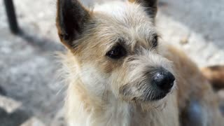 Stray little homeless dog with messy fur. Adopt and shelter concept