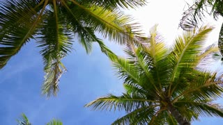 Sunny beach with coconut palm tropical tree from bottom low angle view slow motion