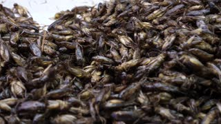 Thailand street food, deep fried insect super food