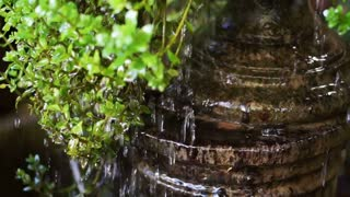 Water drops cascade from green leaves