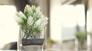 white flower decoration for house or apartment interior room
