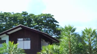Wooden house in tropical garden