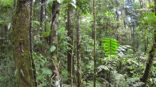 Ascending through the rainforest understory in Ecuador with mossy tree trunk