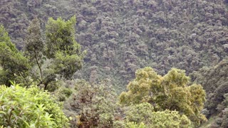 Clearing montane rainforest and causing a landslide. In the Ecuadorian Amazon