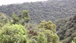 Clearing montane rainforest and causing a landslide in the Ecuadorian Andes
