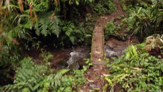 Crossing a bridge in a cloudforest reserve in the Ecuadorian Andes