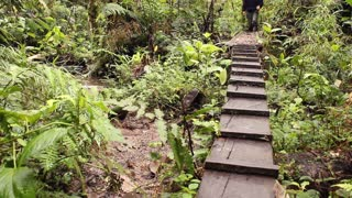 Crossing a stream in a cloudforest reserve in the Andes, Ecuador