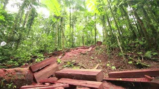 Debris left by loggers in the rainforest.