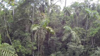 Descending from the canopy of primary Amazonian rainforest in Ecuador