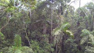 Descending from the rainforest canopy in the Ecuadorian Amazon
