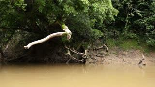 Drifting down an Amazonian river