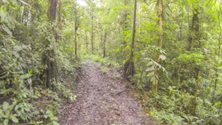 Flying low over above a logging trail in tropical rainforest