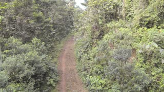 Flying over a track surrounded by primary tropical rainforest in Ecuador