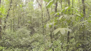 Flying through primary tropical rainforest in the Ecuadorian Amazon