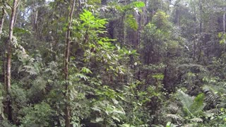 Flying through primary tropical rainforest