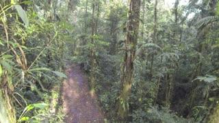 Flying through tropical rainforest above a logging trail in the Ecuadorian Amazon