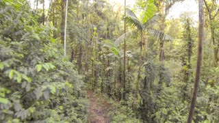 Flying through tropical rainforest above a logging trail