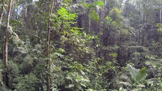 Flying up from the rainforest understory in the Ecuadorian Amazon