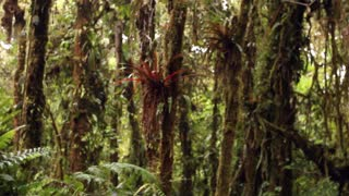 Interior of cloudforest in the Ecuadorian Andes
