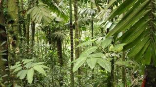 Interior of rainforest in Ecuador