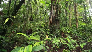 Interior of tropical rainforest in the Ecuadorian Amazon.