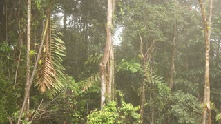 Interior of tropical rainforest on a misty day