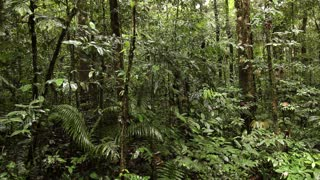 Large tree in tropical rainforest
