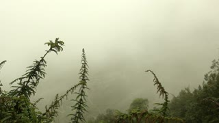Mist in the the Pastaza Valley, Ecuador