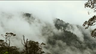 Misty cloudforest in the Ecuadorian Andes, Timelapse