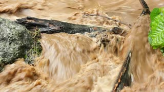 Mud and water pouring down a jungle watercourse after very heavy rain, Ecuador.