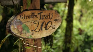 Nature trail in a cloudforest reserve, Ecuador. In the Andes, Ecuador