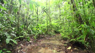 Open muddy clearing in Amazonian Rainforest, Ecuador, during the wet season.