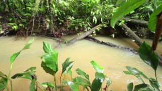 Pan along a stream in tropical rainforest in Ecuador, the water level high after