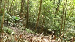Pan to a rotting log in tropical rainforesat